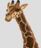 /articles/miniatures/mini-28163-hansa-peluche-geante-girafe-130-cm-h-w8eNK.png